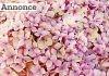 De 10 mest populære blomstrende buske
